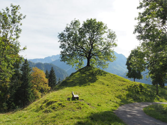 Allgäuer Alpen Allgäuer Landschaft Animal Themes Beauty In Nature Cloud - Sky Day Environment Grass Green Color Growth Herbivorous Land Landscape Nature No People Outdoors Plant Scenics - Nature Sky Tranquility Tree Vertebrate