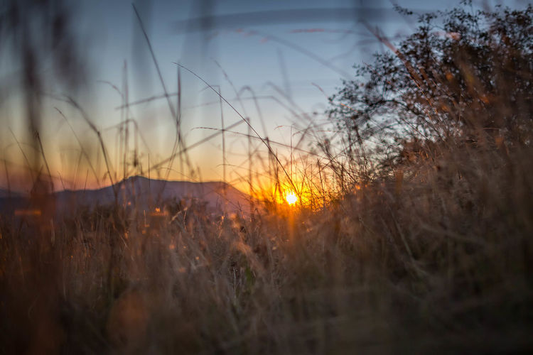 Sunset Plant Sun Sky Nature Beauty In Nature Tranquility Selective Focus No People Land Sunlight Growth Grass Tranquil Scene Outdoors Orange Color Field Lens Flare Environment Tree