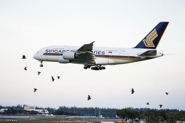 Crows afraid of the big bird Airplane Airport Airbus A380 Airbus A380