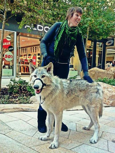 City Creek Mall With Damu~ Pets Dog Exploring Dogs My Dog TheMinimals (less Edit Juxt Photography) A Dogs Life The Mall Salt Lake City I Love My Dog The Minimals (less Edit Juxt Photography) Adventure City Creek Mall DAMU Wolfdogs Shopping