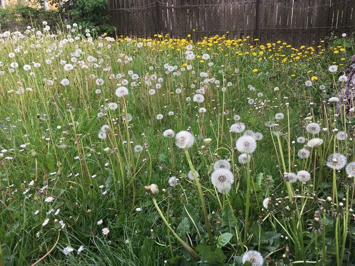 Flower Flowering Plant Plant Growth Freshness Vulnerability  Beauty In Nature Fragility Nature Springtime White Color Field Land No People Tranquility High Angle View Green Color Day Flower Head Grass