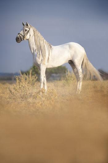 nice horse Horse