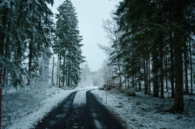 In between many tall Christmas trees The Way Forward Winter Tree Snow Nature Cold Temperature EyeEmNewHere Beauty In Nature Road Transportation Outdoors Tranquility Day Scenics No People Landscape Growth Bare Tree Sky