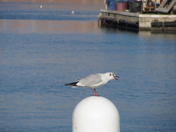 Close-Up Of Seagull Perching On Metal Pole At Sea
