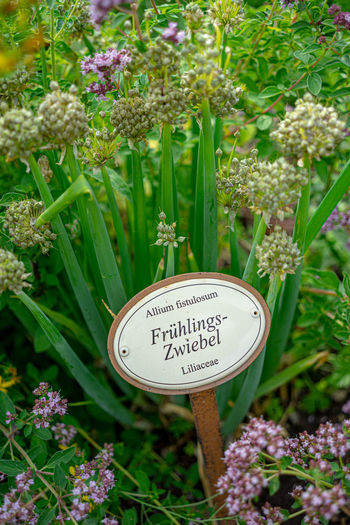 Garten Pflanzenschild Frühlingszwiebel Plant Flower Flowering Plant Communication Text Growth Western Script Nature Freshness Day Sign Green Color Beauty In Nature Close-up No People Leaf Vulnerability  Plant Part Fragility Information Outdoors Flower Head