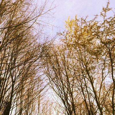 Trees & Sky Adampol Polonezkoy beykoz istanbul turcja