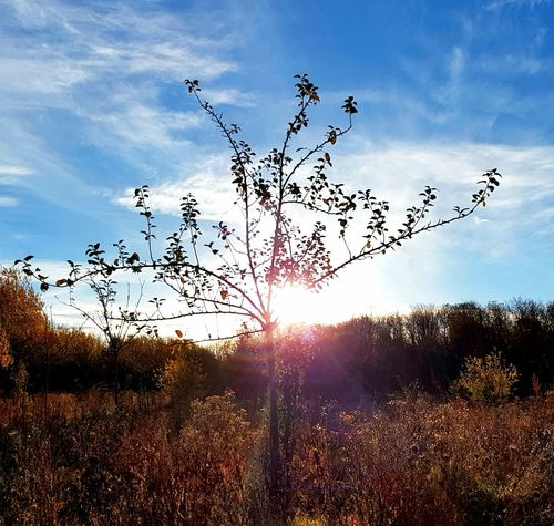 Sun No People Beauty In Nature Outdoors Nature Day Autumn Sunlight Silhouette Sunlight Filtering Through Trees Tree