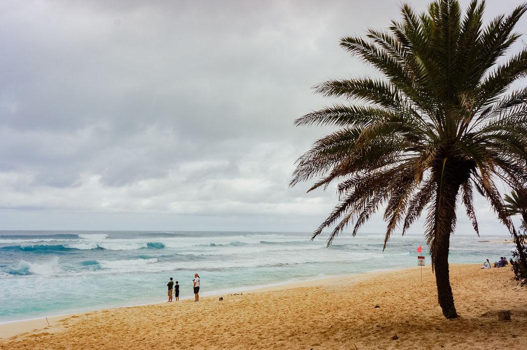 hwaiian life Beach Coastline Horizon Over Water Ocean Outdoors Palm Tree Sand Scenics Sea Shore Summer Sun Sunset Tropical Climate Vacation Vacations Water Weekend Activities