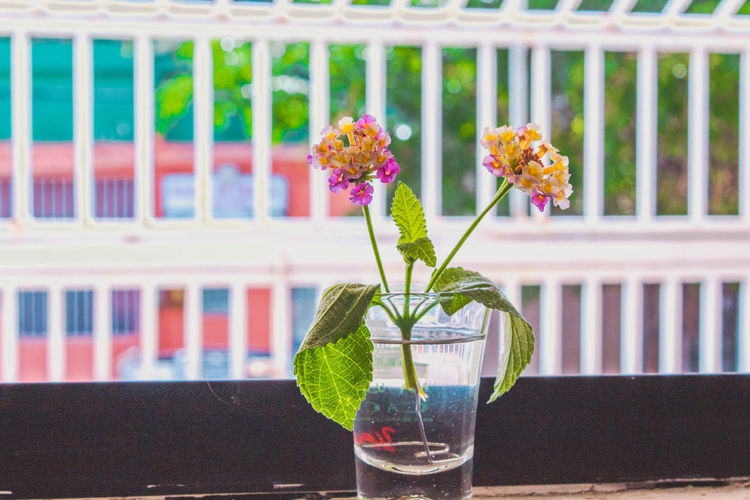 ',' Beauty In Nature Close-up Day Drinking Glass Flower Flower Head Focus On Foreground Fragility Freshness Green Color Growth Home Interior Indoors  Leaf Nature No People Plant Potted Plant Table Vase Water Window