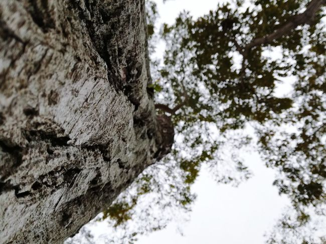 EyeEmNewHere Tree Tree Trunk Low Angle View Nature Winter Snow No People Day Beauty In Nature Textured  Outdoors Growth Sky Branch Cold Temperature Scenics Close-up Eyem Select EyeEm Best Shots Amazing View Been There. Beauty In Nature Nature Lanscape Photography