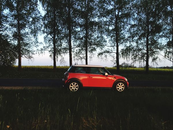 Tree Car Transportation Nature Red Field Land Vehicle Grass Day Growth Outdoors No People Rural Scene Beauty In Nature Sky Cooper Mini Cooper Red Car Red Cooper