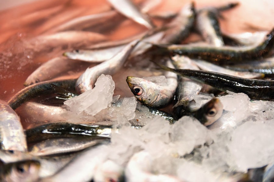 Close-Up Of Freshly Caught Sardines With Red Colored Ice From Blood In The Fish Market Food And Drink Frozen Ice Market Mediterranean Food Red Seafood Animal Blood Close-up Fish Fish Market Fishing Food Freshly Caught Greek Food Healthy Eating Market Stall Pile Raw Food Red Ice Saltwater Fish Sardine Sardines Seafood