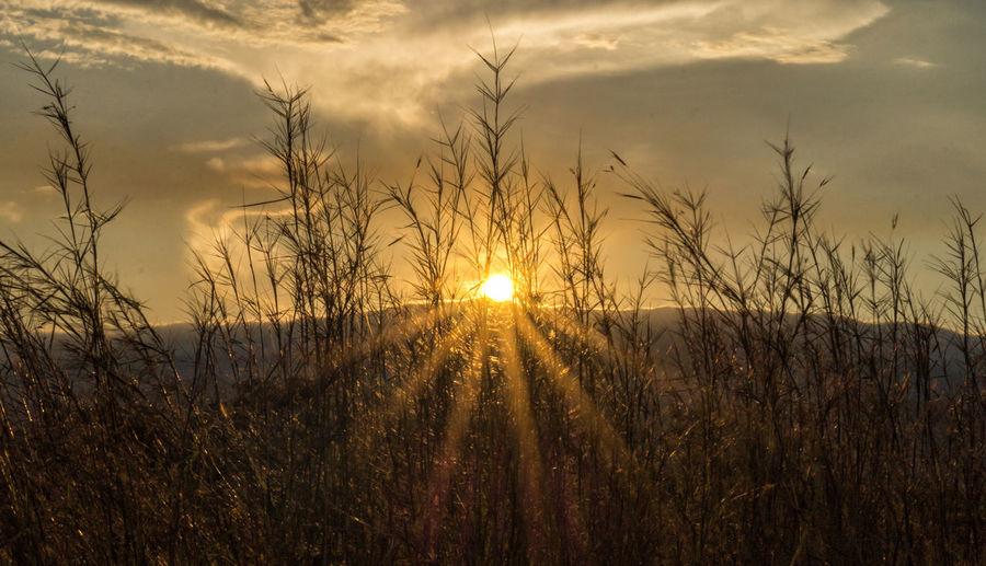 Hermosa luz al atardecer. Paisaje Paisaje Natural Tree Sunset Agriculture Sunlight Sun Silhouette Field Rural Scene Gold Colored Sunbeam Dramatic Sky Storm Cloud Romantic Sky Sky Only Atmospheric Mood Meteorology Cloudscape Lightning