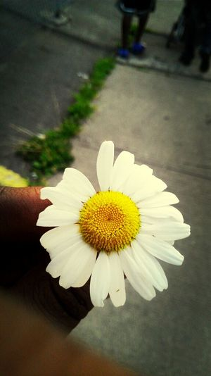 i could be a photographer a pic i took in the summer time