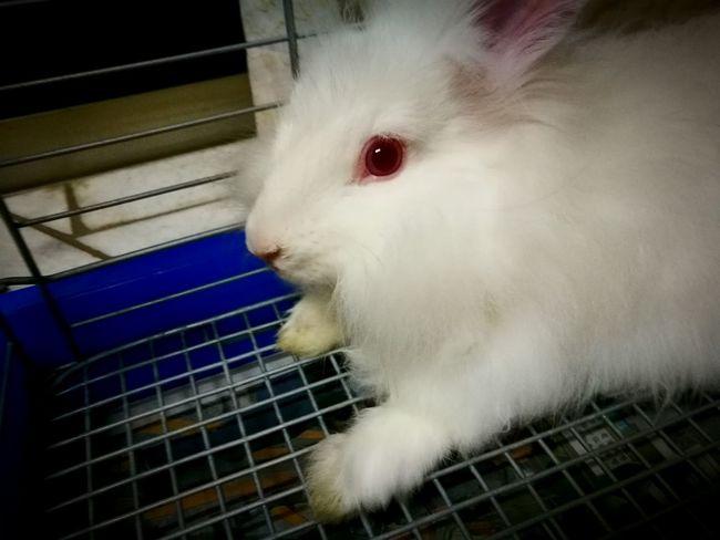 Rabbit 🐇 White Color Pet Close-up