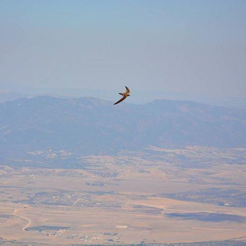Tunisia IgersTunisia Bird over Mountain Wikilovesearth Wikimediatn Nature بون ... أعلى من راس القرصاع فما عصافر زغوان ^_^ يطيرو أعلى و أعلى :)