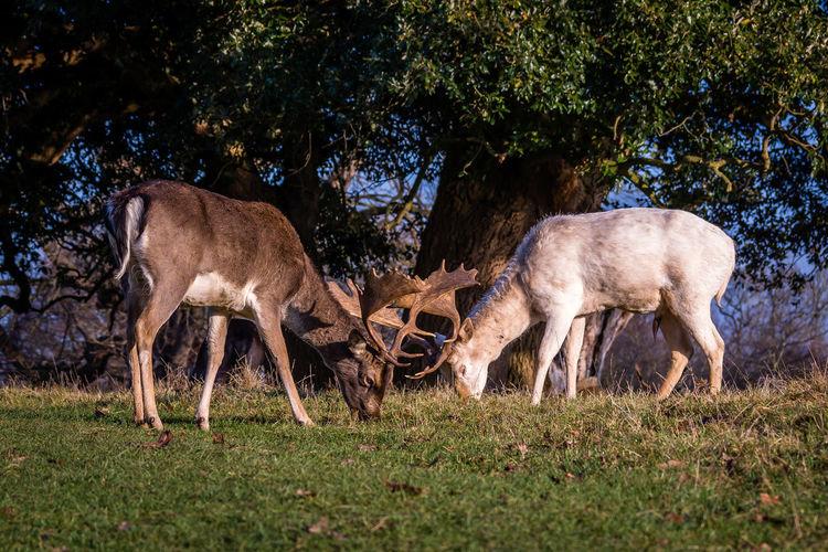 Deer on grass