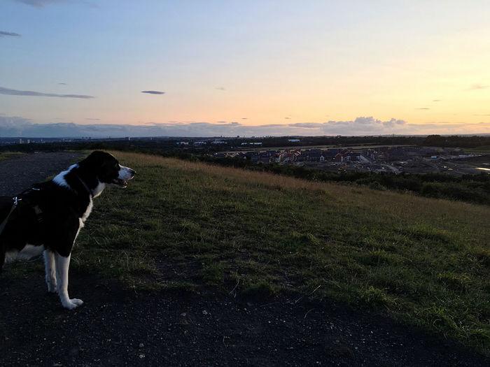 Sunset Wallsend
