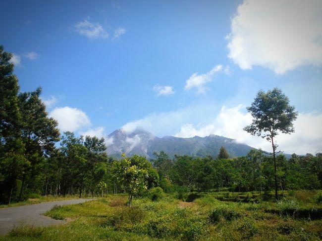 Nature No People Landscape Day Outdoors Tree EyeEmBestPics EyeEm Best Shots EyeEm Gallery Klaten Indonesia Deles♡