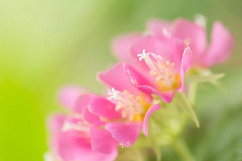 Flowerporn EyeEm Best Shots - Flowers Macro_collection Macroclique