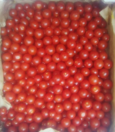 Pomodorini rossi Red Water Plant Scenics Cuore❤ Sole...☀ Nature Food Red Tranquility Meteorology