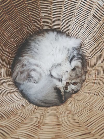Directly above portrait of cat in basket