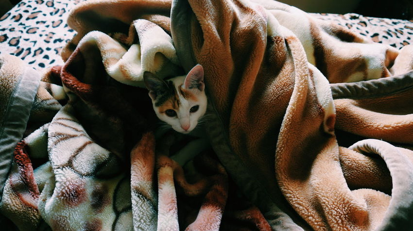Peekaboo 🐈 ❤️💙💚💛💜💓💔💕💖💗💘💝💞💟❣️👁️ Cat Cats Cat Lovers Cat Lover Lazy Lazy Cat Lazy Cats Sleeping Sleeping Cat Sleeping Pet Animal Lover Mobilephotography Shootermag AMPt_community VSCO Vscocam AndroidPhotography Androidography Love Beautiful Beauty Peekaboo Always Be Cozy