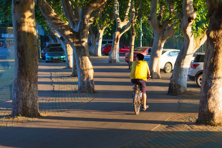 Rear View Of Man Riding Bicycle On Footpath Amidst Trees