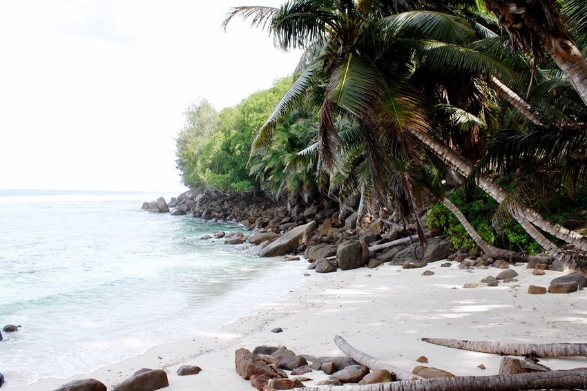 Hello World Hello Seychelles Paradise Palm Tree Beach Sand Tropical Climate Nature Travel Destinations No People Beauty In Nature Outdoors Beachin Seychelles Islands Enjoying Life Taking Pictures Click Click 📷📷📷 Beach Life Real Life Africa Traveling Exploring Seychelles Beautiful Nature