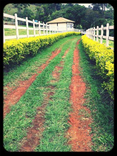 #farm #way #house #fences #road #flowers #tiradentes #brazil