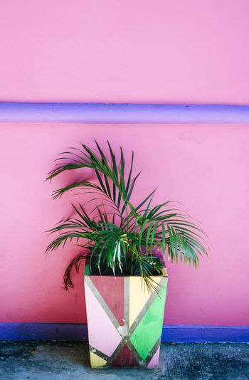 Potted plant by pink wall outdoors