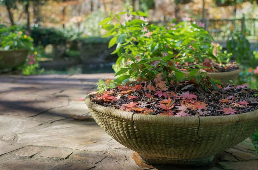 Decor Fall Color Close-up Day Fallen Leaves Freshness Growth Nature No People Outdoors Plant Planter Potted Plant Gibbs Gardens