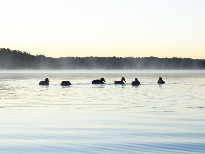 Side view of birds in calm lake
