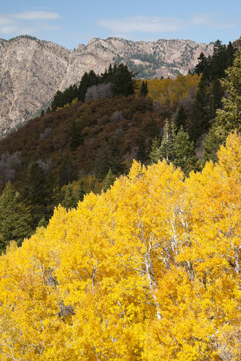 Scenic view of yellow flowering plants and mountains during autumn