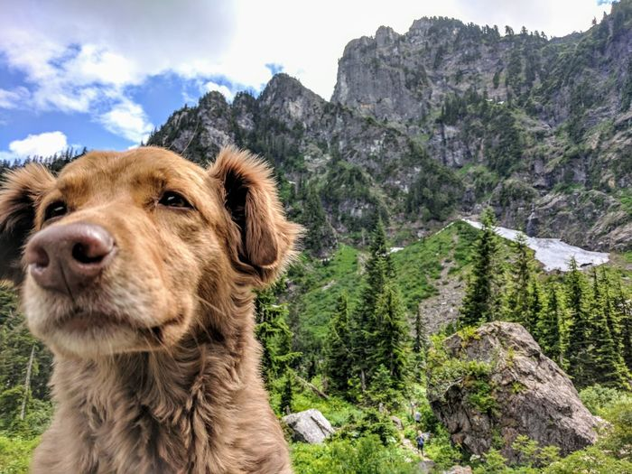 Dog Pets Outdoors Mountain Animal Themes Nature Close-up Adventure
