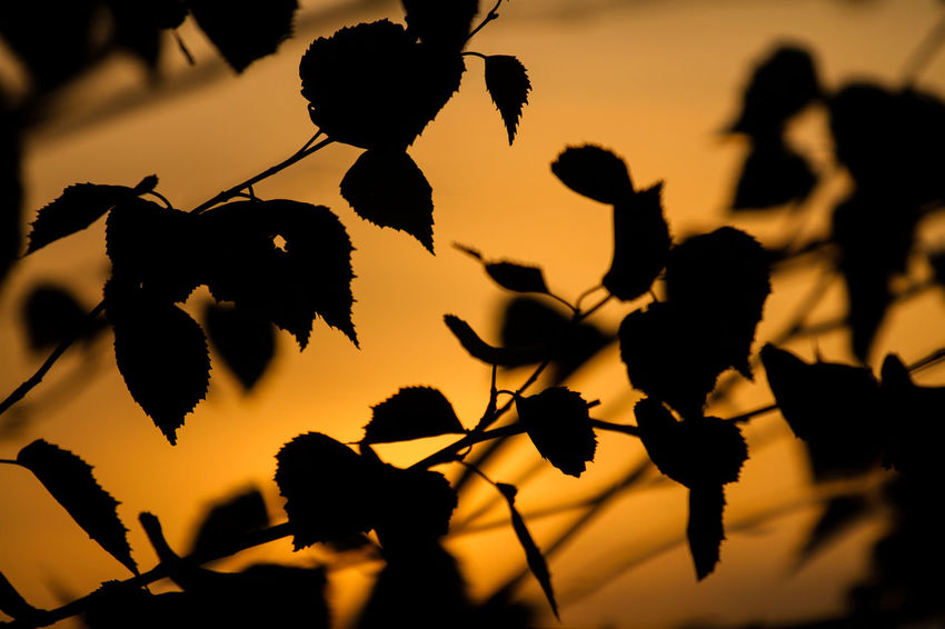 Beauty In Nature Close-up Day Flower Growth Nature No People Outdoors Plant Silhouette Sky Sunset