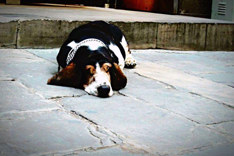 Dogs Dog Love Barcelona Barrio Gótico SPAIN Animal Themes Pets Streetphotography Animal Animal Photography Urban Animals