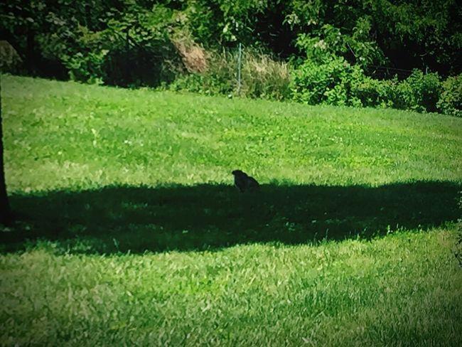 Lepre Lepre Garden Animal
