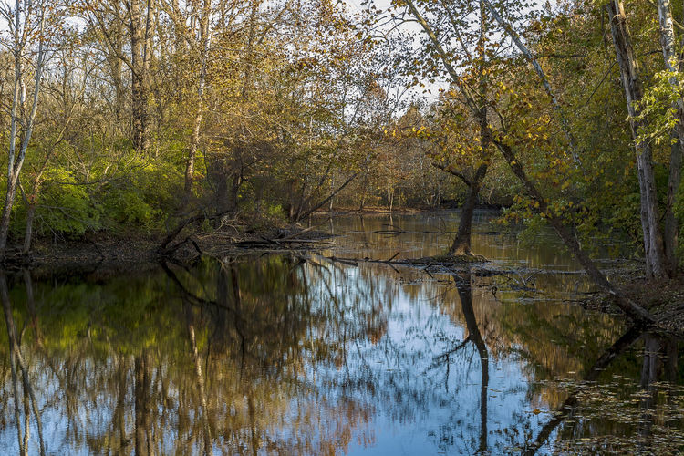Autumn colors on the river. Fall Autumn Color Autumn colors Season  River Water Rural Scene Landscape Tree Plant Reflection Lake Tranquility Forest Beauty In Nature No People Nature Growth Scenics - Nature Tranquil Scene Non-urban Scene Outdoors Waterfront WoodLand