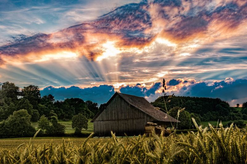 Landscape House Rural Scene Tree Cloud - Sky Scenics Field Beauty In Nature Built Structure Tranquil Scene Agriculture Architecture Tranquility Nature Farm Growth Sky Sunbeam Non-urban Scene