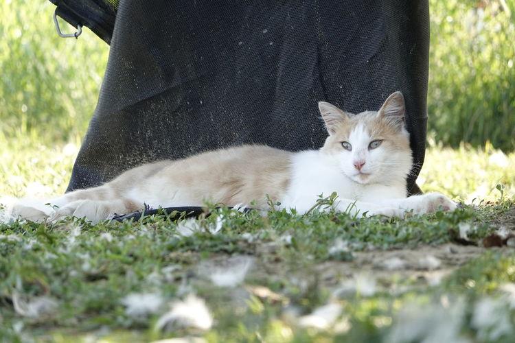 Portrait of cat resting on grass