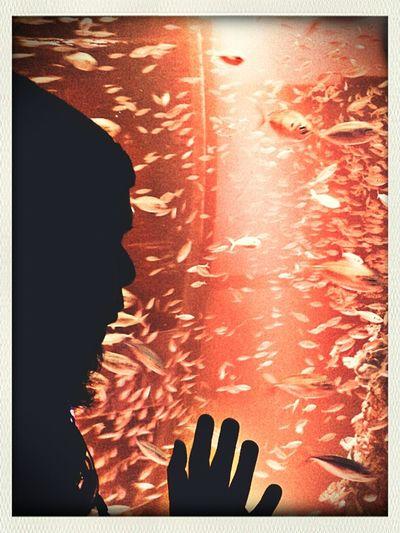 #sea_aquarium #fishes #silhouette Silhouette Fishes Aquarium