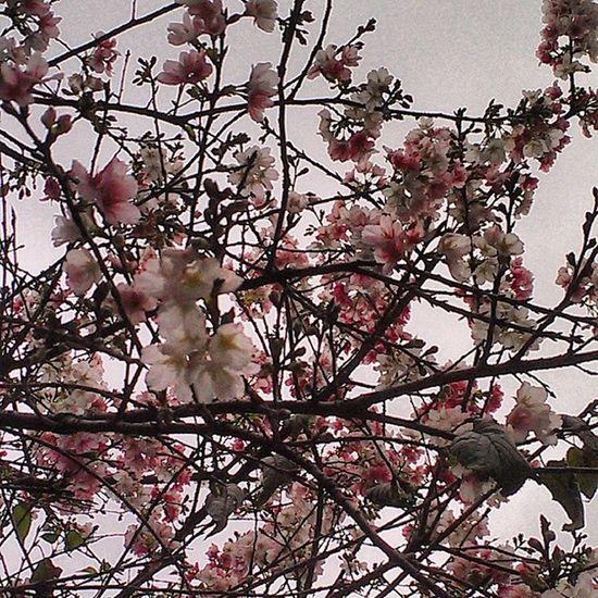 台北,樂利路上。 On Street Taipei Flowers