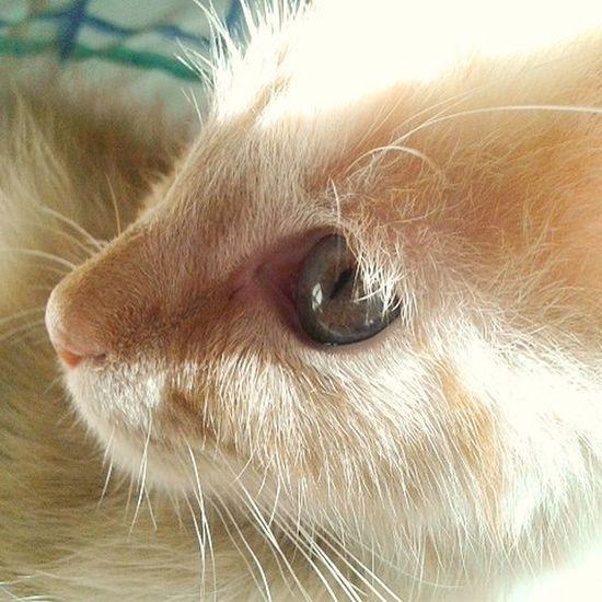 Cat Catlover Eye Animals Animallover Clemente Gato Cute Loamo Tierno Ojo Profundo Pelitos Pet Rubio Gatitos Hijo Vida Expresion