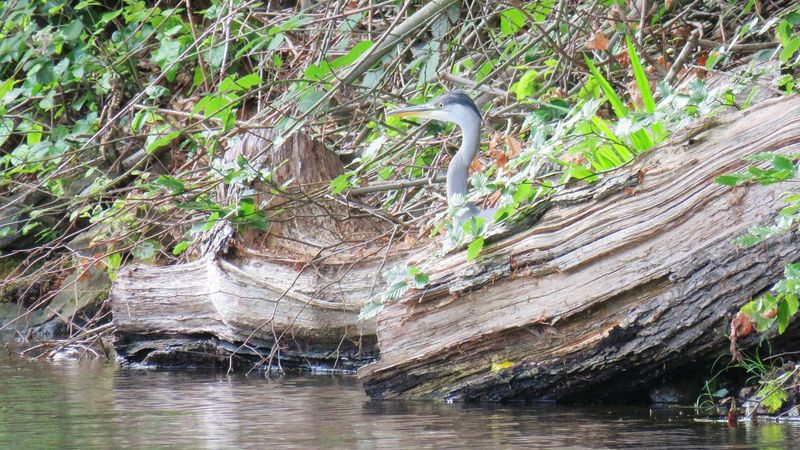 Day Outdoors No People Nature Tree Water Beauty In Nature Heron On The Canal Beauty In Nature