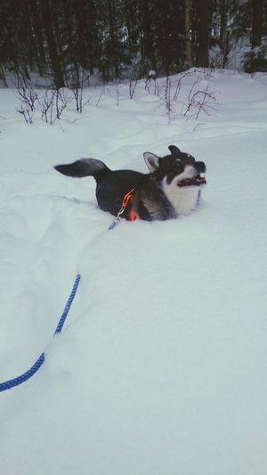 favorite dog Dog Snow Happyhappyhappy