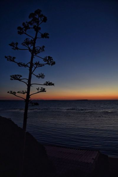 Sea Horizon Over Water Nature Beauty In Nature Tranquil Scene Tranquility Sunset Scenics Sky Water Beach Clear Sky Tree No People Idyllic Silhouette Growth Outdoors Branch Day Paradiso S'archittu Sardegna Tramonto Spettacolodellanatura EyeEmBestPics