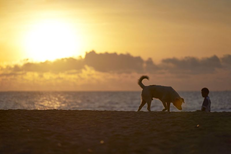 Sunset Full Length Sea Beach Summer Sun Silhouette Sky Coast Tranquil Scene Atmospheric Mood Scenics Romantic Sky