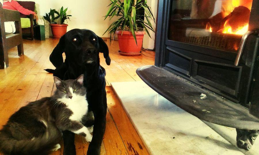 Dogs Cats Love EyeEm Animal Lover Animal Love