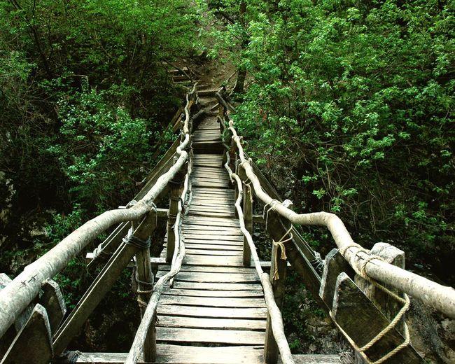 Swinging bridge Green Nature Ral Assets Natural Treasure Border Regions Swinging Emotions Eco Trail Ecotourism Tree Footbridge Rope Bridge